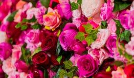 Rosa und purpurrote Rosen für romantischen Valentinsgruß-Tag stockfoto