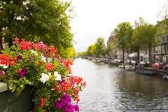 Rosa und rote Blumen mit grünen Blättern in der Amsterdam-Stadt stockbild