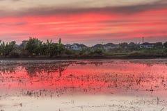 Rosa und rote Farbton des Sonnenuntergangs auf dem Reisgebiet nach Ernte Lizenzfreie Stockbilder
