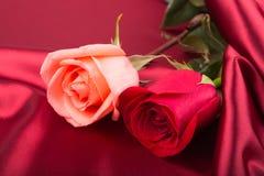 Rosa und rote Rosen Lizenzfreies Stockbild