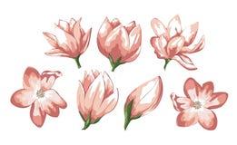Rosa und Sahneblume Heiratseinladungskartenvektor-Zusammenfassungsgestaltungselement lokalisierte Farben für Entwurf lizenzfreie abbildung