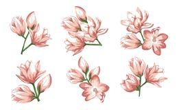 Rosa und Sahneblume Heiratseinladungskartenvektor-Zusammenfassungsgestaltungselement lokalisierte Farben für Entwurf stock abbildung