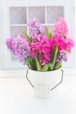 Rosa und violette Hyazinthen Lizenzfreie Stockfotografie