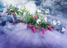 Rosa und weiße Blumen in den Wolken lizenzfreie stockfotos