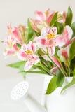 Rosa und weiße Blumen in einem weißen Topf Lizenzfreie Stockfotografie
