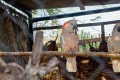 Rosa und weißer Papagei stockfotos