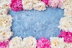 Rosa und weißer Pfingstrosenrahmen auf blauem Hintergrund Kopieren Sie Raum, Spitze Lizenzfreie Stockbilder
