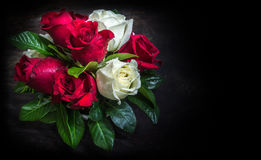 Rosa- und Weißrose mit verschiedenen Blättern Lizenzfreie Stockfotografie