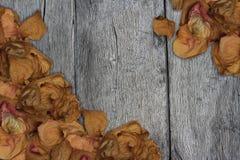 Rosa valentinbakgrund för kronblad Royaltyfri Fotografi