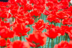 Rosa valentindag Royaltyfri Bild