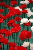 Rosa valentindag Royaltyfria Bilder