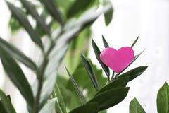 Rosa Valentinsgrußherz auf grüner Niederlassung Stockfoto