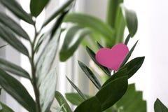Rosa Valentinsgrußherz auf grüner Niederlassung Stockfotos