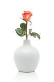 Rosa in vaso bianco immagine stock