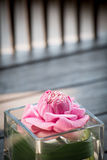 Rosa vatten lilly Royaltyfri Foto