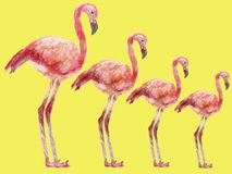 Rosa vattenfärgflamingo, hand-målad illustration med den rosa flamingo royaltyfri illustrationer