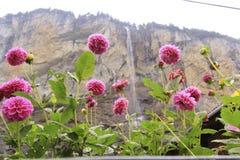 rosa vattenfall royaltyfri fotografi