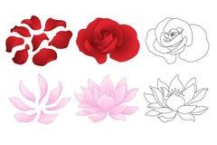 Rosa vektor och lotusblomma Arkivbilder
