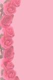 Rosa verbließ die stationären Rosen Lizenzfreies Stockbild