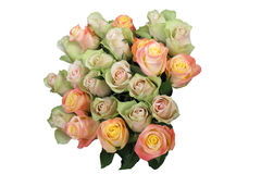 Rosa verde ed anziana Fotografia Stock