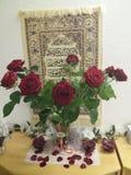 Rosa vermelha fotografia de stock