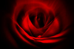 Rosa vermelha abstrata Fotografia de Stock