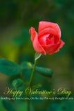 Rosa vermelha bonita ilustração stock