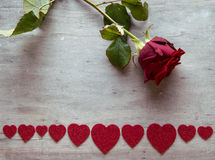 Rosa vermelha bonita Fotos de Stock