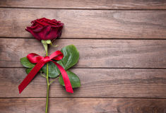 Rosa vermelha bonita Foto de Stock Royalty Free