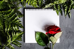 Rosa vermelha e folhas verdes que encontram-se no backgroung concreto cinzento Configuração lisa Vista superior imagem de stock