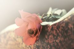 Rosa vermelha na lápide Fotografia de Stock