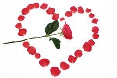 Rosa vermelha no coração das pétalas Imagens de Stock Royalty Free