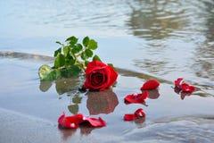 Rosa vermelha no mar Imagens de Stock Royalty Free