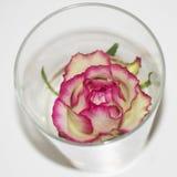 Rosa in vetro Fotografie Stock