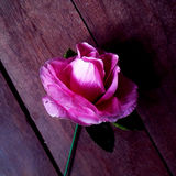 Rosa vieja del rosa Fotos de archivo libres de regalías