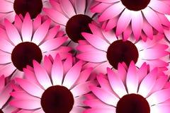Rosa vita blommor Royaltyfria Bilder