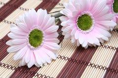 rosa vykort för blommor Fotografering för Bildbyråer