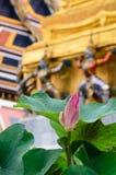 Rosa waterlily com as grandes folhas verdes da água Imagem de Stock Royalty Free