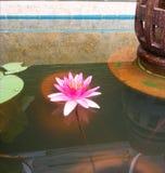 Rosa waterlily in einem Teich Lizenzfreie Stockfotografie