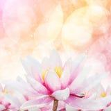 Rosa Waterlily-Hintergrund-Design Lizenzfreies Stockbild