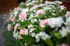 Rosa weiße Orchidee Lizenzfreies Stockfoto