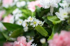 Rosa weiße Orchidee Lizenzfreie Stockfotografie