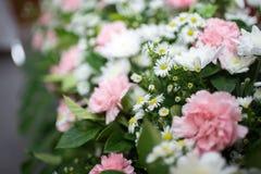 Rosa weiße Orchidee Stockbilder