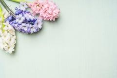 Rosa, weiße und blaue Hyazinthen blüht Bündel an auf hellem schäbigem schickem Hintergrund, Draufsicht stockfotografie