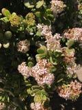 Rosa, weiße und rote Blumen Stockbild