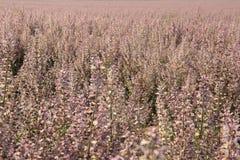 Rosa weise Blumen im Feldsommerhintergrund stockfotos