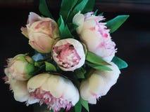 rosa white för blommor royaltyfria foton