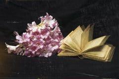 rosa white för orchid Royaltyfri Fotografi