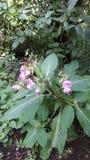 Rosa Wildflowers in der Hecke lizenzfreies stockbild