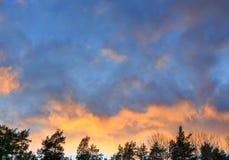 Rosa Wolken bei Sonnenuntergang über Treetops Stockbilder